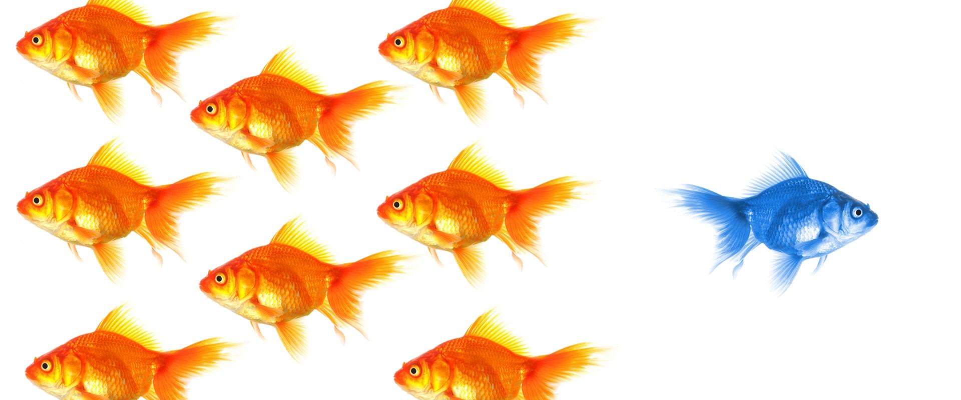 Independence Direction Leadership Fish Metaphor